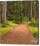 Lush Green Forest At Cheakamus Acrylic Print