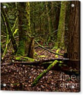 Lush Green Forest Acrylic Print