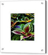 Lush_09.29.12 Acrylic Print
