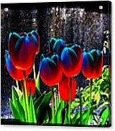 Lustrous Tulips Acrylic Print