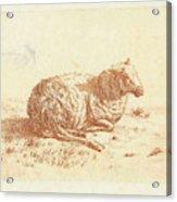 Lying Sheep, Ernst Willem Jan Bagelaar Acrylic Print
