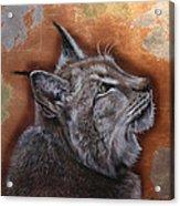Lynx Face Acrylic Print