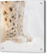 Lynx Feet Acrylic Print