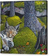 Lynx In The Sun Acrylic Print