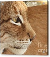 Lynx Profile Acrylic Print