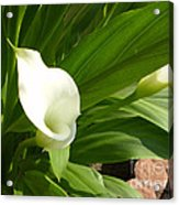 M White Flowers Collection No. W5 Acrylic Print