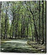 M119 Tunnel Of Trees Michigan Acrylic Print