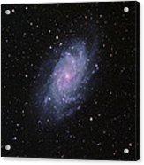 M33--the Triangulum Galaxy Acrylic Print
