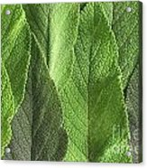 M7500790 - Sage Leaves Acrylic Print