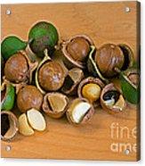 Macadamia Nuts Acrylic Print