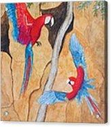 Macaw Claylick Acrylic Print