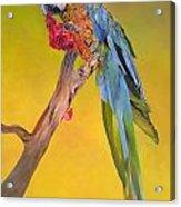 Macaw's Dream Acrylic Print