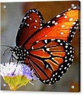 Macro Butterfly Acrylic Print