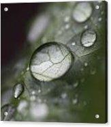 Macro Dew Drop Acrylic Print