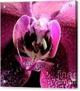 Macro Magenta Orchid Acrylic Print