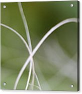 Macro Of A Green Palm Tree Leaf  Acrylic Print