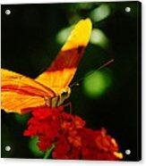 Macro Of An Orange Butterfly Acrylic Print