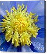 Macro Photograph Of  Blue Waterlily Acrylic Print