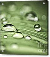 Macro Raindrops On Green Leaf Acrylic Print