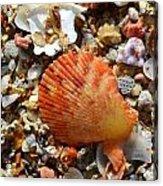 Macro Shell On Sand Acrylic Print by Riad Belhimer