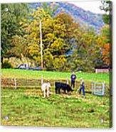 Mac's Farm In Balsam Grove 2 Acrylic Print