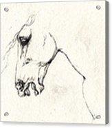 Mad Horse Acrylic Print