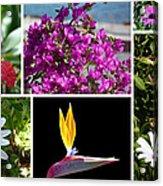 Madeiran Flower Collage Acrylic Print