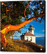 Madrone And Lighthouse Acrylic Print