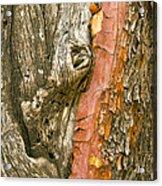 Madrone Tree Bark Acrylic Print