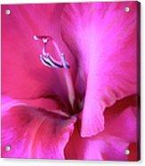 Magenta Splendor Gladiola Flower Acrylic Print by Jennie Marie Schell