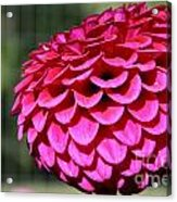 Magenta's Orb Acrylic Print