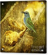 Magic At The Feeder... Acrylic Print