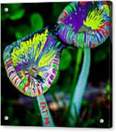 Magic Mushrooms Acrylic Print
