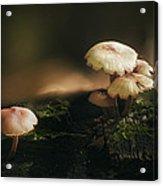 Magic Mushrooms Acrylic Print