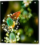 Magic Spring Acrylic Print