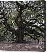 Magical Angel Oak Acrylic Print