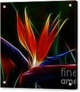 Magical Bird Of Paradise Acrylic Print