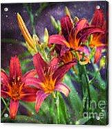 Magical Evening Daylilies Acrylic Print