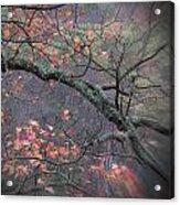 Magical Fall  Acrylic Print