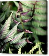 Magical Forest 3 Acrylic Print