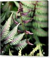 Magical Forest 3 Acrylic Print