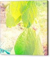 Magical Leaves Acrylic Print