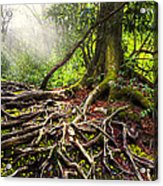 Magical Light On The Appalachian Trail Acrylic Print by Debra and Dave Vanderlaan