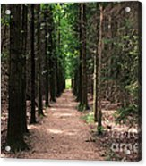 Magical Path Acrylic Print