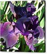 Magical Purple Iridescent  Iris Acrylic Print