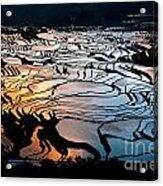 Magnificent Rice Terrace Acrylic Print