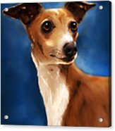 Magnifico - Italian Greyhound Acrylic Print by Michelle Wrighton