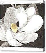 Magnolia 1 Acrylic Print