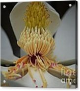 Magnolia 14-4 Acrylic Print