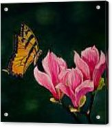 Magnolia And Butterfly Acrylic Print